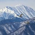 Photos: アルプス飛行