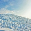 写真: 藏王樹冰