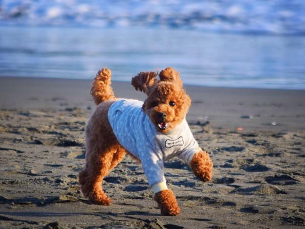 お散歩ワンコ@湘南・鵠沼海岸 #湘南 #藤沢 #海 #波 #wave #surfing #mysky #animal #dog #犬