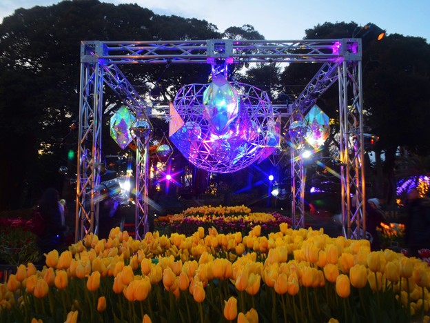 江ノ島のウインターチューリップ #湘南 #藤沢 #海 #surfing #江ノ島 #イルミネーション #flower #花