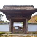 宝亀山長寿寺 山門 #湘南 #鎌倉 #kamakura #寺 #temple #花 #flower