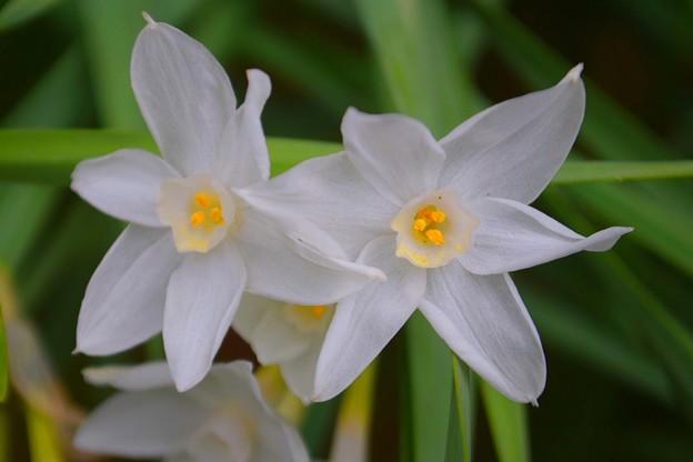 ホワイトペーパー@浄智寺 #湘南 #鎌倉 #kamakura #寺 #temple #花 #flower
