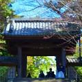 瑞鹿山円覚興聖禅寺 総門 #湘南 #鎌倉 #kamakura #mysky #寺 #temple