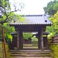 鎌倉五山第三位 寿福寺山門 #鎌倉 #kamakura #寺 #temple