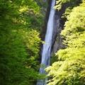 酒水の滝 #丹沢 #山北 #酒匂川 #滝