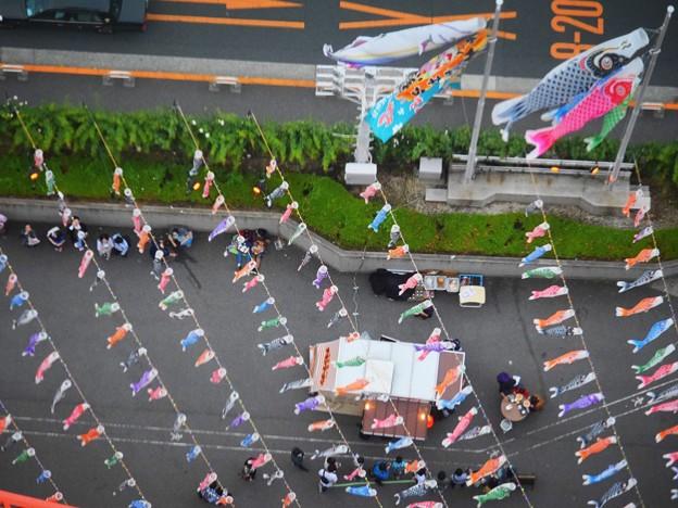 東京タワー展望台からの鯉のぼり #tokyo #tokyotower #東京 #東京タワー #carpshapedstreamer #鯉のぼり #mysky