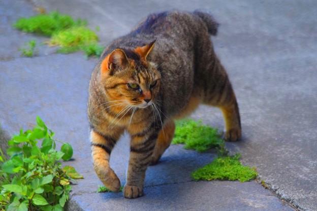 光明寺のニャンコ #湘南 #鎌倉 #kamakura #寺 #cat #animal #猫