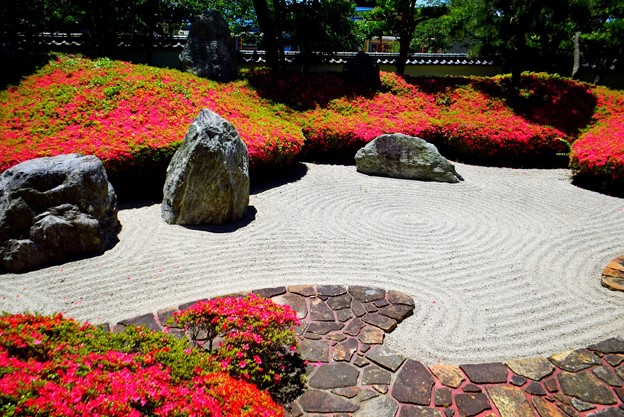 光明寺三尊五祖の庭園 #湘南 #鎌倉 #kamakura #寺 #花 #flower