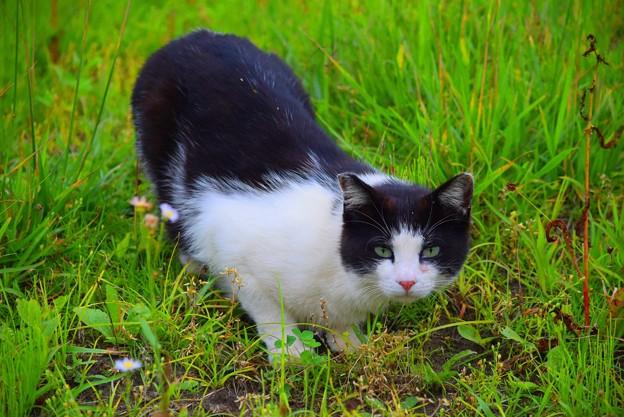 様子を伺うニャンコ@湘南・鵠沼海岸 #湘南 #藤沢 #海 #波 #animal #猫 #mysky #cat