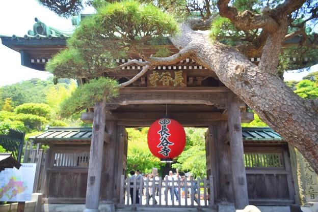 写真: 海光山長谷寺 山門 #鎌倉 #湘南 #kamakura #寺 #temple #長谷寺