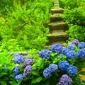写真: 光則寺の紫陽花 #鎌倉 #湘南 #kamakura #temple #寺 #花 #flower #紫陽花