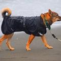 写真: お散歩ワンコ@湘南・鵠沼海岸 #湘南 #藤沢 #海 #波 #wave #surfing #mysky #犬 #animal #dog
