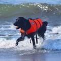 写真: お散歩ワンコ@湘南・鵠沼海岸 #湘南 #藤沢 #海 #波 #wave #surfing #mysky #beach #犬 #dog #animal