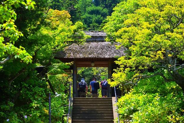 松岡山東慶寺 山門 #kamakura #鎌倉 #湘南 #寺 #temple #花 #flower
