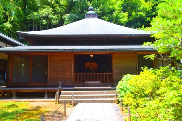 東慶寺本堂 #kamakura #鎌倉 #湘南 #寺 #temple