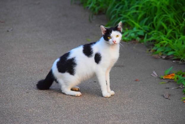 湘南・鵠沼海岸のニャンコ #湘南 #藤沢 #海 #波 #wave #surfing #mysky #animal #cat #猫