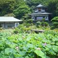 光明寺記主庭園 #鎌倉 #湘南 #kamakura #shonan #寺 #temple #花 #flower #大賀蓮