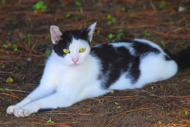 日陰で休むニャンコ@湘南・鵠沼海岸 #湘南 #藤沢 #海 #波 #wave #surfing #mysky #cat #猫 #animal