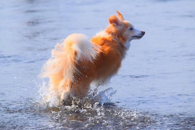 お散歩ワンコ@湘南・鵠沼海岸 #湘南 #藤沢 #海 #波 #wave #surfing #mysky #beach #dog #animal #犬