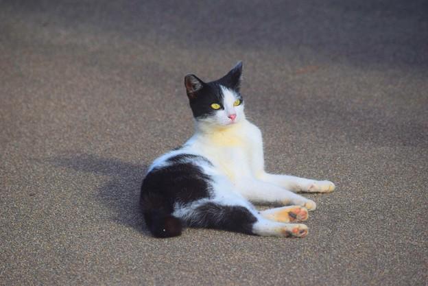 湘南・鵠沼海岸のニャンコ #湘南 #藤沢 #海 #波 #wave #surfing #mysky #beach #shonan #cat #animal #猫