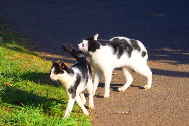 しっぽパンチを食らうニャンコ@湘南・鵠沼海岸 #湘南 #藤沢 #海 #波 #wave #surfing #mysky #animal #猫 #cat