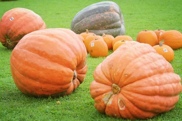 巨大かぼちゃ #鎌倉 #kamakura #湘南 #mysky #halloween #ハロウィン