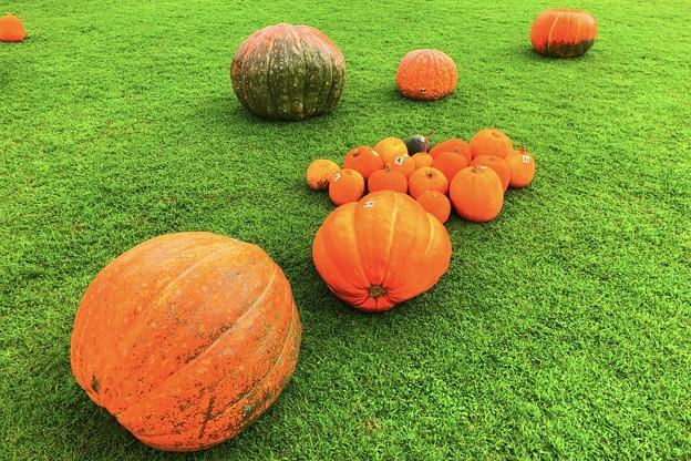 秋の収穫 #鎌倉 #kamakura #湘南 #mysky #halloween #ハロウィン