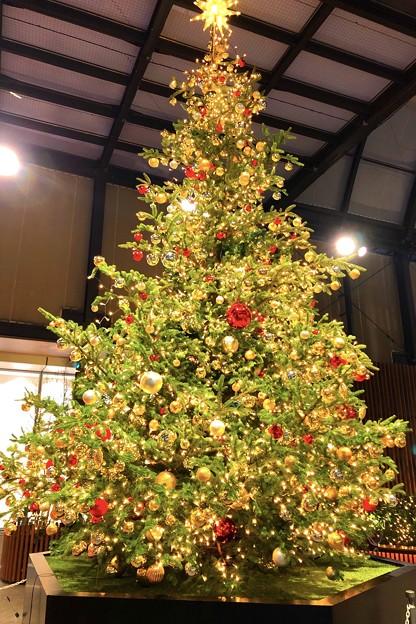 タイムズスクエアのクリスマスツリー #新宿 #東京 #クリスマス #イルミネーション #shinjuku #christmas #illumination