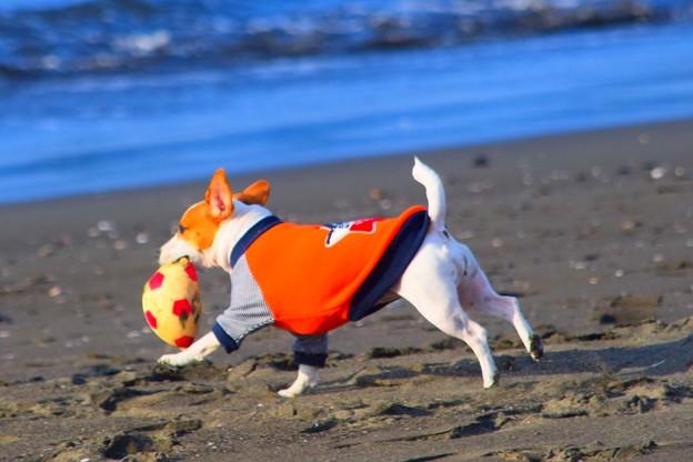 お散歩ワンコ@湘南・鵠沼海岸 #湘南 #藤沢 #海 #波 #wave #surfing #beach #mysky #犬 #dog #animal