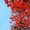 海蔵寺の紅葉 #湘南 #kamakura #鎌倉 #temple #寺 #mysky #紅葉 #flower #花