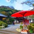 海蔵寺境内 #湘南 #kamakura #鎌倉 #temple #寺 #mysky #紅葉 #flower #花