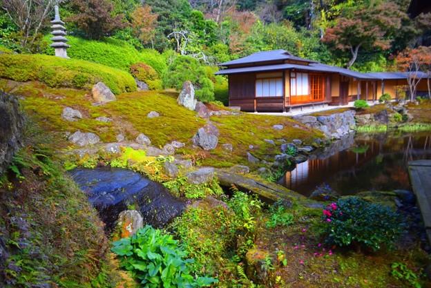 海蔵寺庭園 #湘南 #kamakura #鎌倉 #temple #寺 #mysky #紅葉 #garden #庭園