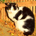 Photos: 湘南・鵠沼海岸のニャンコ  #湘南 #藤沢 #海 #波 #wave #surfing #mysky #猫 #animal #cat