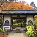 福源山明月院総門 #mysky #湘南 #kamakura #鎌倉 #temple #寺 #紅葉 #autumnleaves