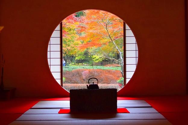 明月院本堂丸窓から後庭園の紅葉 #mysky #湘南 #kamakura #鎌倉 #temple #寺 #紅葉 #autumnleaves