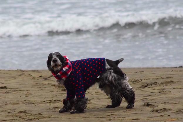 お散歩ワンコ@湘南・鵠沼海岸 #湘南 #藤沢 #海 #波 #wave #surfing #mysky #beach #犬 #dog #animal