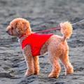 お散歩ワンコ@湘南・鵠沼海岸 #湘南 #藤沢 #海 #波 #wave #surfing #mysky #犬 #animal #dog
