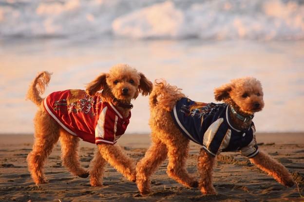 お散歩ワンコ@湘南・鵠沼海岸 #湘南 #藤沢 #海 #波 #wave #surfing #mysky #beach #animal #dog #犬