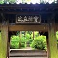 Photos: 金峰山浄智寺山門  #湘南 #鎌倉 #kamakura #寺 #temple #花 #flower