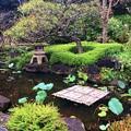 Photos: 長谷寺前庭園 #湘南 #鎌倉 #寺 #長谷寺 #temple #kamakura #mysky #flower #花