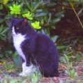 湘南・鵠沼海岸のニャンコ #湘南 #藤沢 #海 #波 #wave #surfing #sea #beach #cat #animal #猫