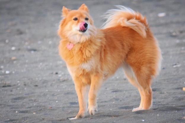初散歩@湘南・鵠沼海岸 #湘南 #藤沢 #海 #波 #wave #surfing #sea #dog #犬