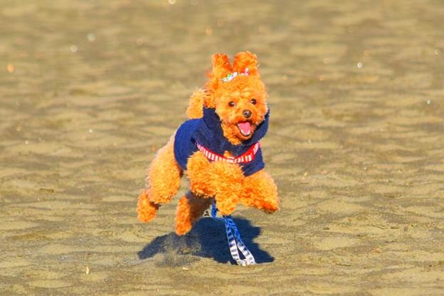 お散歩ワンコ@湘南・鵠沼海岸 #湘南 #藤沢 #海 #波 #wave #surfing #mysky #sea #dog #animal #犬