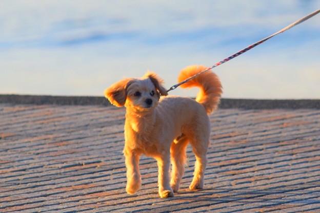 お散歩ワンコ@湘南・鵠沼海岸 #湘南 #藤沢 #海 #波 #wave #surfing #sea #mysky #犬 #dog #animal