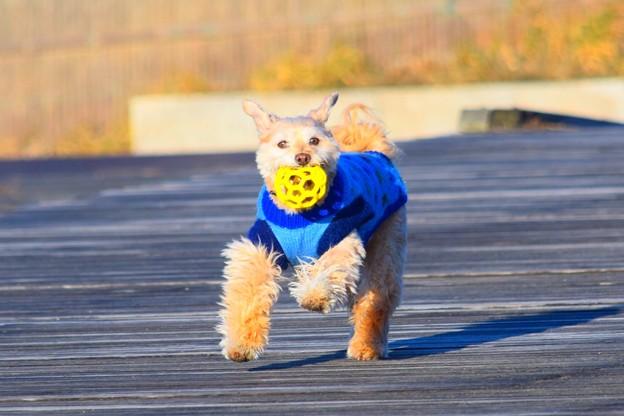 お散歩ワンコ@湘南・鵠沼海岸 #湘南 #海 #波 #wave #surfing #mysky #animal #dog #犬