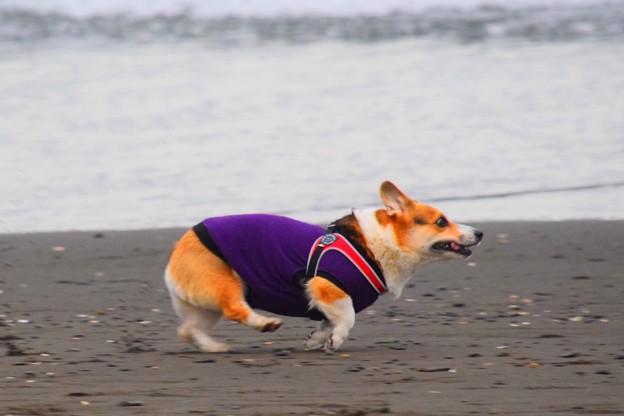 お散歩ワンコ@湘南・鵠沼海岸 #湘南 #藤沢 #海 #海 #wave #surfing #サーフィン #sea #mysky #dog #犬 #animal