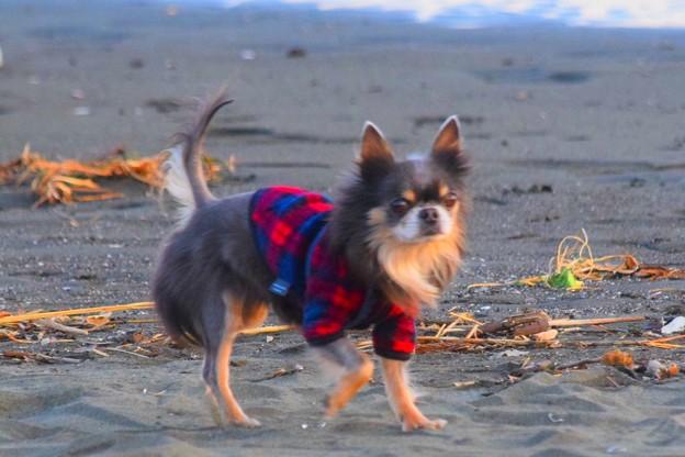 お散歩ワンコ@湘南・鵠沼海岸 #湘南 #藤沢 #海 #波 #wave #surfing #mysky #sea #animal #dog #犬