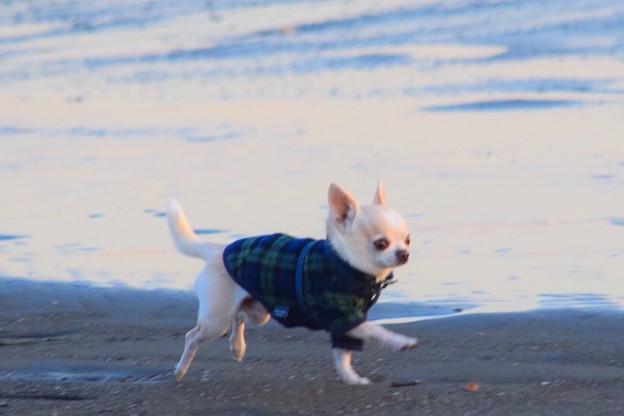 お散歩ワンコ@湘南・鵠沼海岸 #湘南 #藤沢 #海 #波 #wave #surfing #sea #dog #犬 #animal