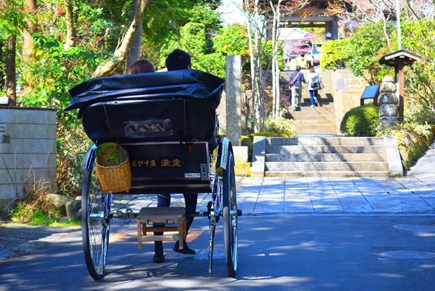 海蔵寺に向かう人力車 #湘南 #鎌倉 #kamakura #寺 #temple #mysky #花 #flower #人力車