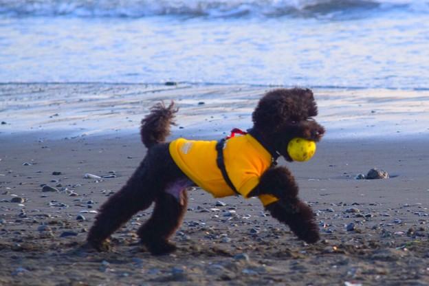お散歩ワンコ@湘南・鵠沼海岸 #湘南 #海 #波 #wave #surfing #サーフィン #sea #犬 #dog #animal